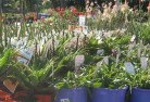 Abbotsford NSW Plant nursery 16