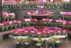 Abbotsford NSW Plant nursery 4