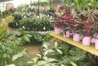Abbotsford NSW Plant nursery 7