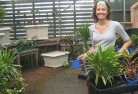 Abbotsford NSW Plant nursery 9
